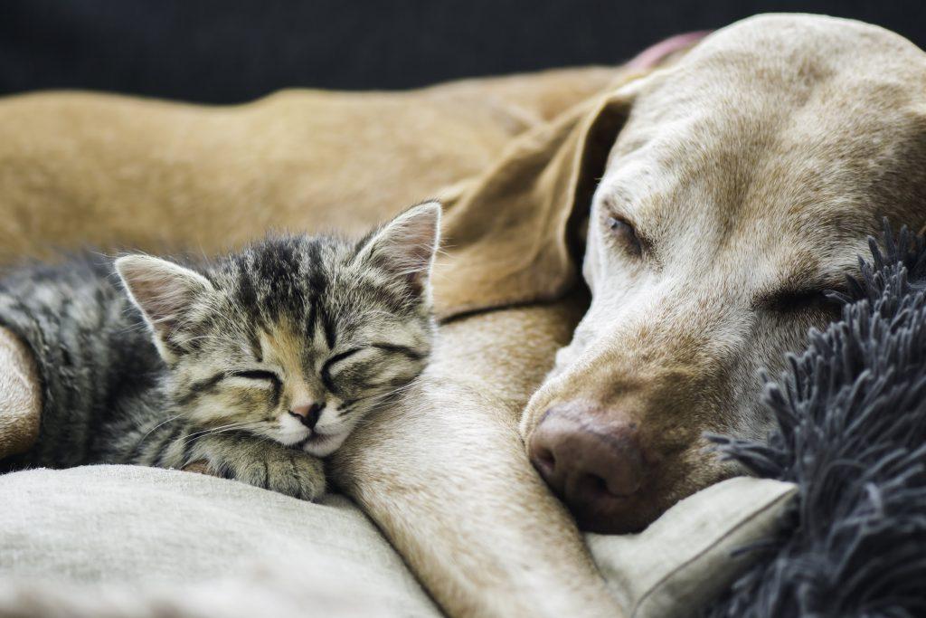 nhiễm giun sán chó mèo