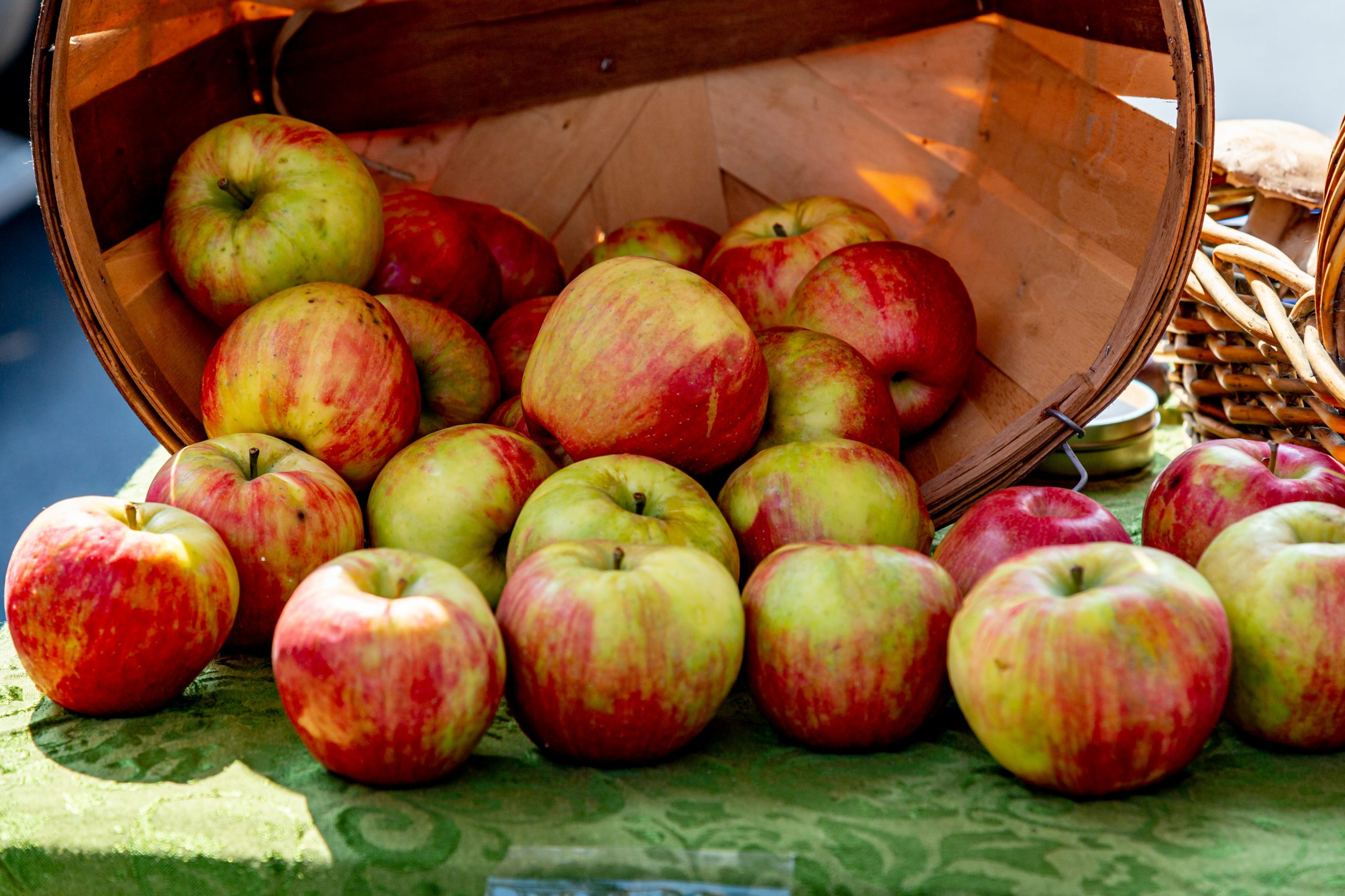 Apples, prebiotic-rich food for gut health